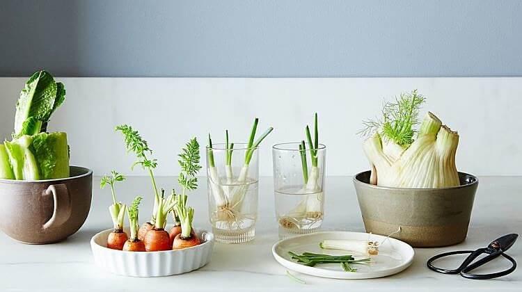 Growing-Food-From-Scraps.jpg